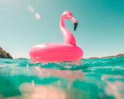 pink flamingo swim ring on body of water in summer