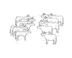 Ähren und Kühe
